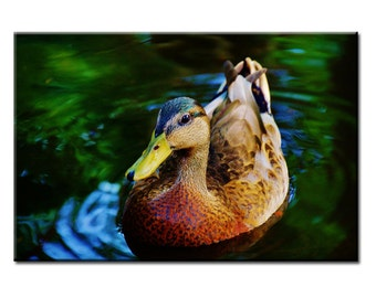 Afternoon Swim - Nature Photography Print