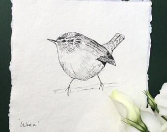 Wren Pen & Ink Sketch
