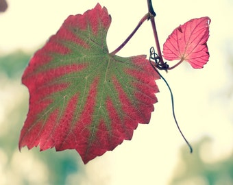red autumn leaf photo print nature photography nature photography 8 x10 6 x 8 wall decor green red yellow garden