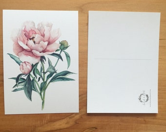 Chrysanthemum - Postcard