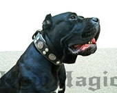 Black and Silver Custom dog Collar with metal coins conchos/ Collar for large size dogs/ Handmade/ Leather dog collar/ Pet collar/ NM131233