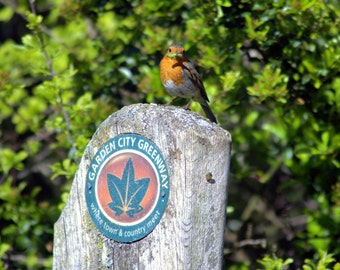 Robin photograph, country town, photography,countryside, animal photography,bird photography, wall art decor gifts,Letchworth Garden City