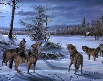 Beautiful Wolves Canvas Print (16 inches by 12 inches)