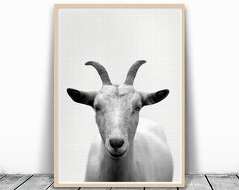 Sheep Print, Sheep Photography, Goat Photography, Goat Print, Farm Animal Art, Photography Print, Printable Sheep, Black and White Sheep Art