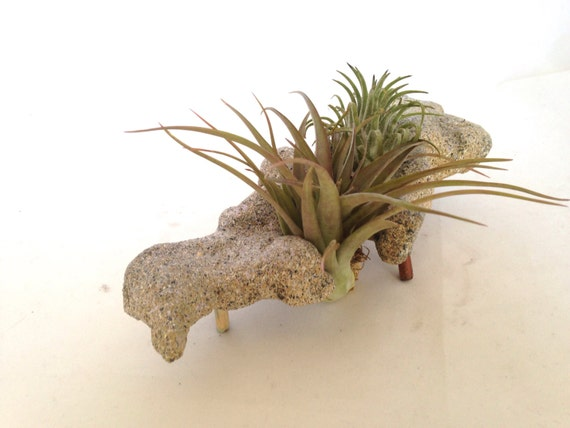 Air Plant Areangement with Hand Carved Holder