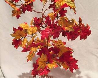 Tall Red Yellow Maple