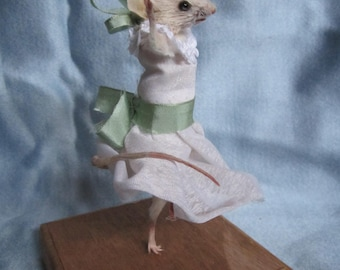 taxidermy taxidermy dancer rat rat mouse cabinet of curiosity