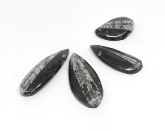 4 Orthoceras Fossil Cabochons- OF002