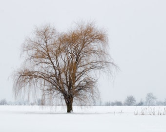 Winter Willow Tree Photo Canvas Print Winter Landscape Photography Fine Art Large County Wall Art