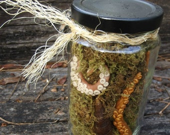 Tentacles in a Jar Cabinet of Curiosities and Oddities Octopus Tentacle