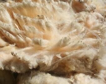 Hampshire Down raw wool/ruwe wol 2.8kg/6.17lb