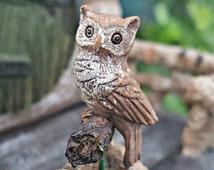 Miniature Owl - Hoot