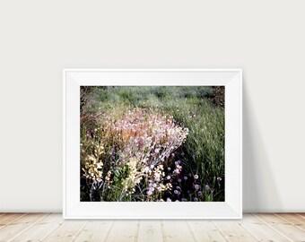 Dandelion photo, flowers, landscape photography, travel, garden, allotment, photography, wall art, interior design, summer garden, fine art