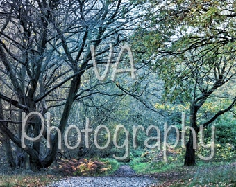 Autumn Snaps (Forest, Leaves, Scenery)