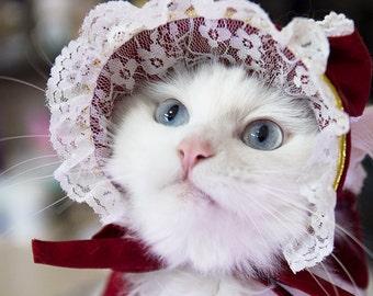 Noble valentine red Cat bonnet, cape