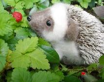 Hedgehog  toys Handmade Hedgehog Felt toy Needle Felted Hedgehog Miniature hedgehog Felted hedgehog  Miniature animal Woodland