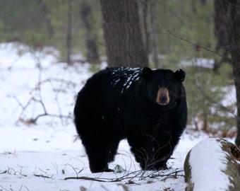 The Nature Nerds Rule 2016 Wildlife Calendar