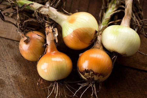 50 Yellow Sweet Spanish Onion Plant Organic