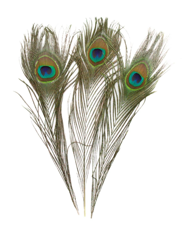 Beautiful natural short peacock feathers 10 12 - Beautiful peacock feather ...
