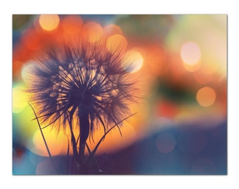 Dandilion Nature Photography Flower Floral Decor. Art photography. Botanical Nature Canvas