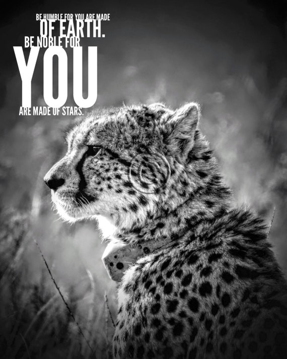 Cheetah wall art Printable quoteAnimal photography Office