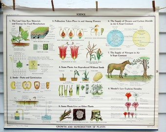 Growth and Reproduction of Plants Vintage Science Chart