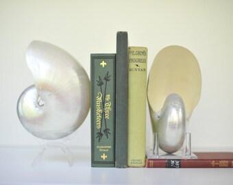 Natural Pearl Nautilus Shell