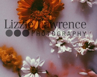 flowers instant download photo milk beautiful peaceful photography