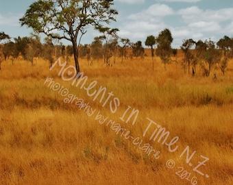 MIT African Landscape Digital Background