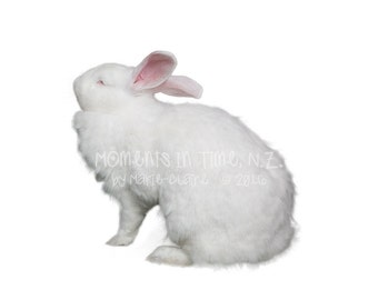 Moments In Time NZ White Rabbit Digital Animal Overlay