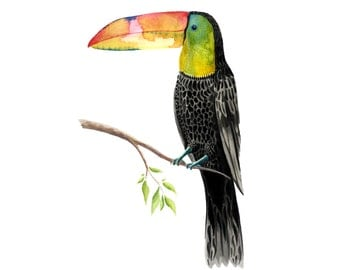 Toucan Print - Watercolour Painting