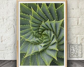 Suculent print, Aloe wall art, Spiral poster, Botanical art, Plant wall decor, Green, Suculent photo, Macro, Modern wall art #010