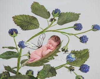 Digital backdrop berry newborn boy