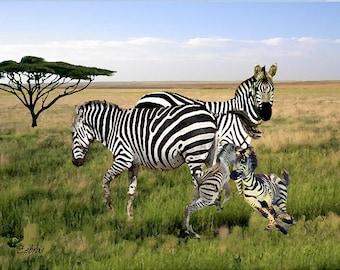 Zebras    African Art, Zebra, Velde, Animal Art