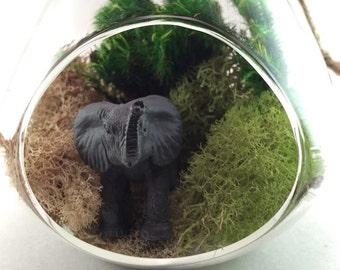 Elephant Moss Terrarium