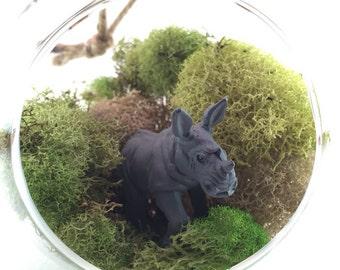 Rhino Moss Terrarium