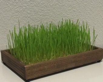 Decorative Wheatgrass Garden Deluxe