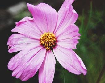 Big flower macro shot purple