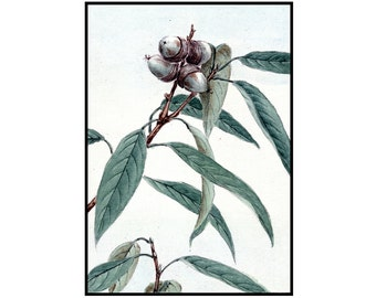 Oak Digital Print - Oak Vintage Print - Acorn Drawing - Japanese Print - Japanese Art - Green - Botanical - Ink Drawing - Digital Download