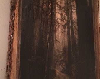 Redwood forest on wood