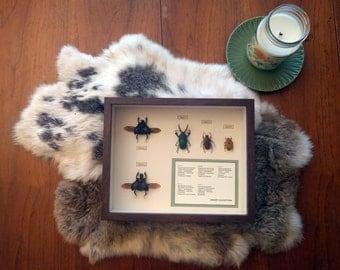 Order Coleoptera Display 2
