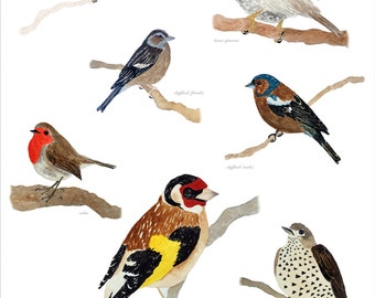 Birds of Brockley, A3 print - Limited Edition (50)
