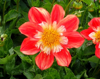 Orange Flower Photograph