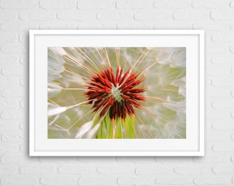 Flower Deco Art Photo With Frame