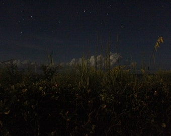 Stars over Seagrass