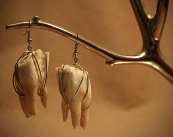 Cow Teeth Earrings (D)