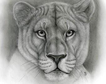 cougar skeatch