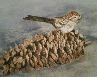 Original painting, water color pinecone and sparrow. 11X14