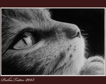 pet portrait, cat portrait, custom cat portrait, portrait pet, custom portrait pet, cat from photo, pencil pet portrait, pencil portrait pet