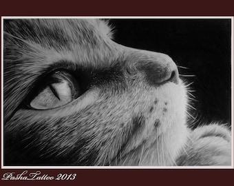 pet portrait, cat portrait, custom cat portrait, portrait pet, custom portrait pet, cat from photo, pencil pet portrait, pencil portrait pet